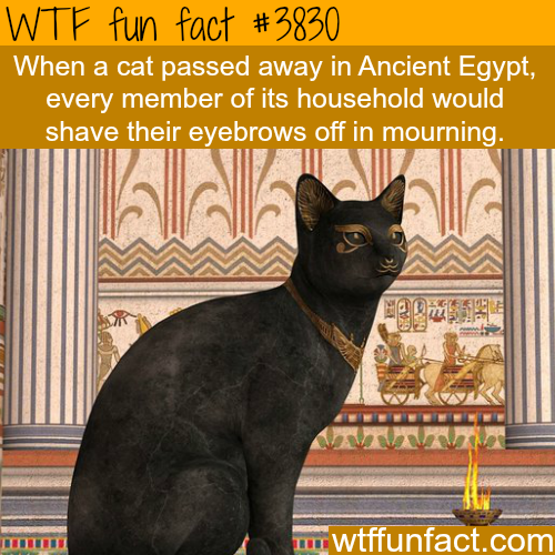 Cats in ancient Egypt WTF fun facts ancienthistoryfacts
