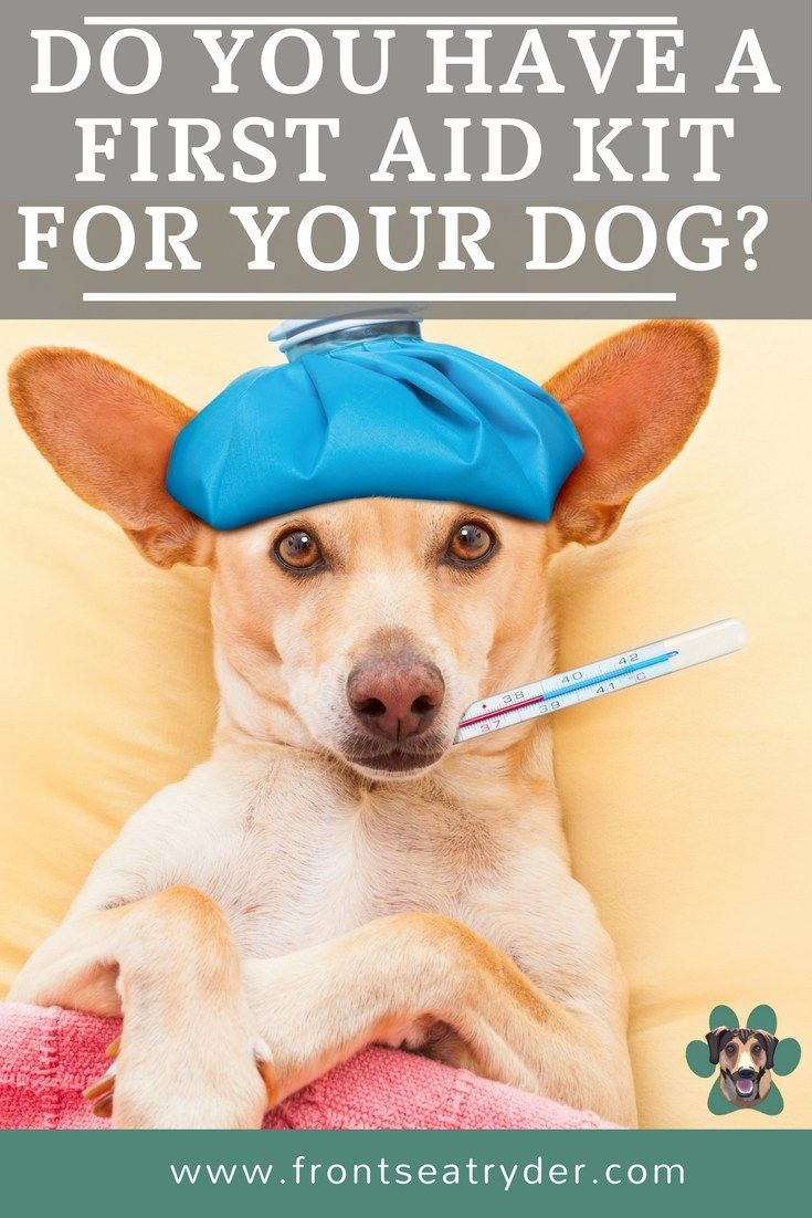 Do you have a first aid kit for your dog whether you are