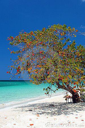 Seven miles beach negril jamaica jamaica me crazy mon 39 pinterest jama que le mer et plage - Villa de reve pineapple jamaique ...