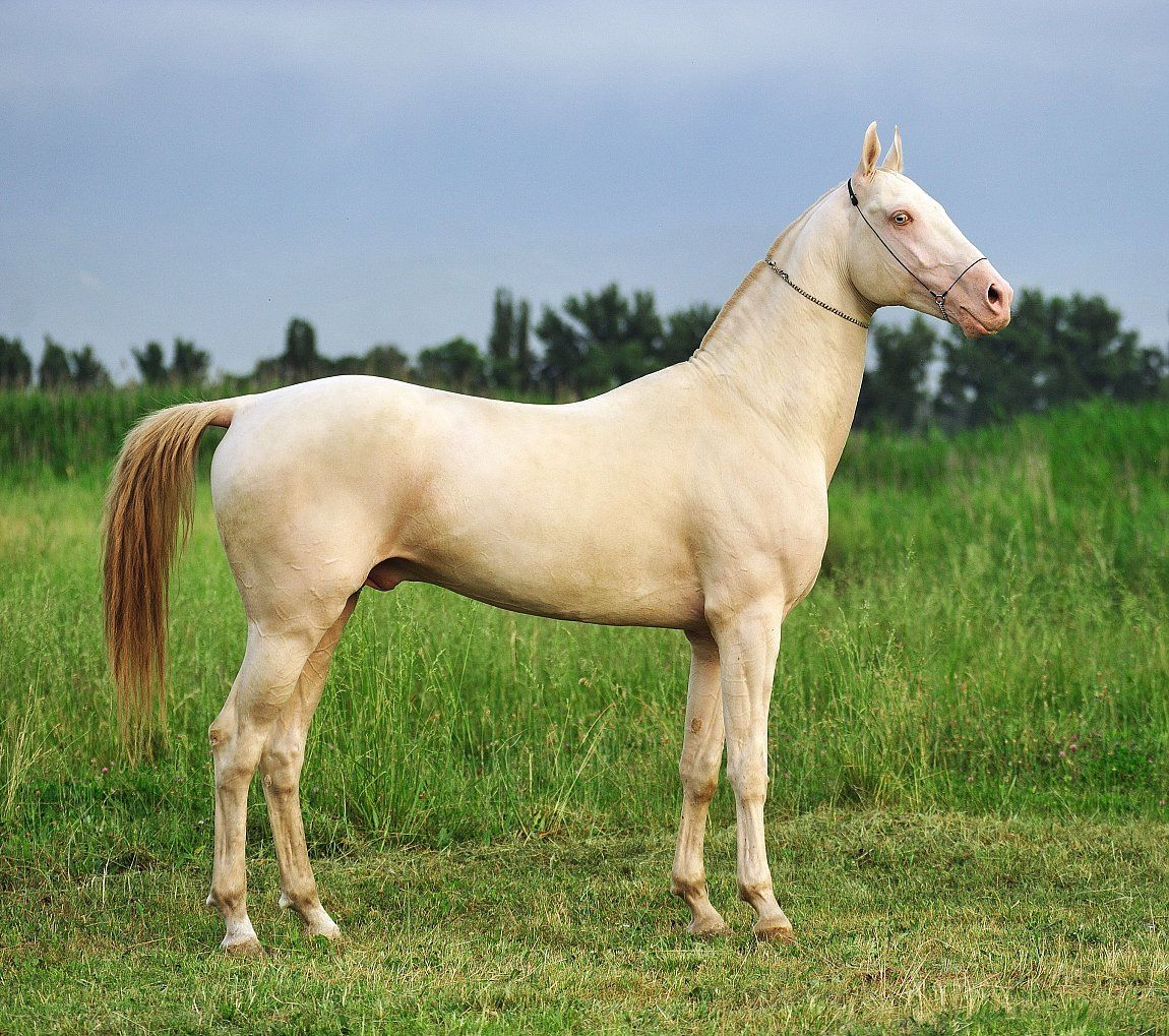Miras - Farm stud DACOR