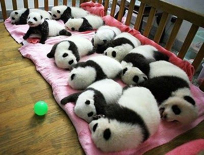 How many Pandas does it take to fetch the ball?