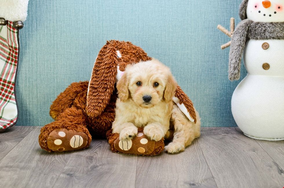 Puppies for adoption in northeast ohio