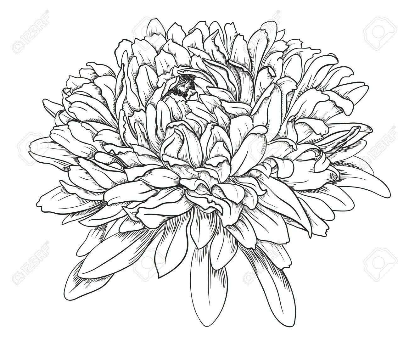 Aster September stencils Drawings Tattoos Chrysanthemum tattoo