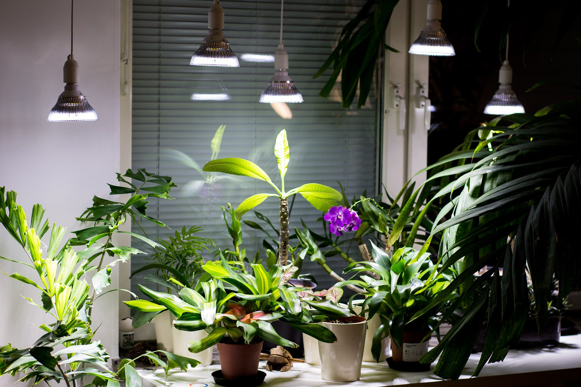 Fine Let It Be Light Led Grow Lights Led And Cfl Lamps For Indoors Wiring Digital Resources Operpmognl