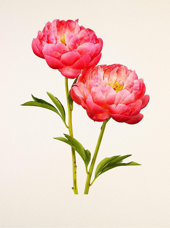 The most beautiful flowers art inspiration pinterest flower art the most beautiful flowers hyper real kenji toma izmirmasajfo