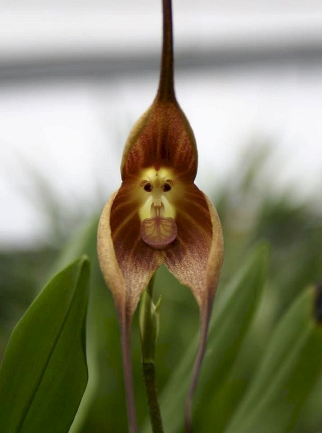 Beautify your garden with orchids rare ideas best orchids ideas