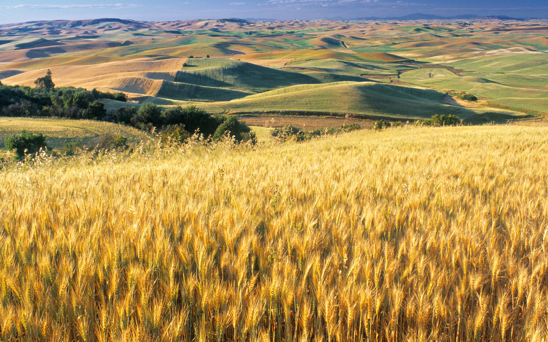 Amber Waves Of Grain Nature Landscape
