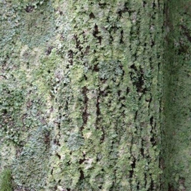 How To Rid Oak Trees Of Green Fungus Hunker Oak Tree Fungi Plant Fungus