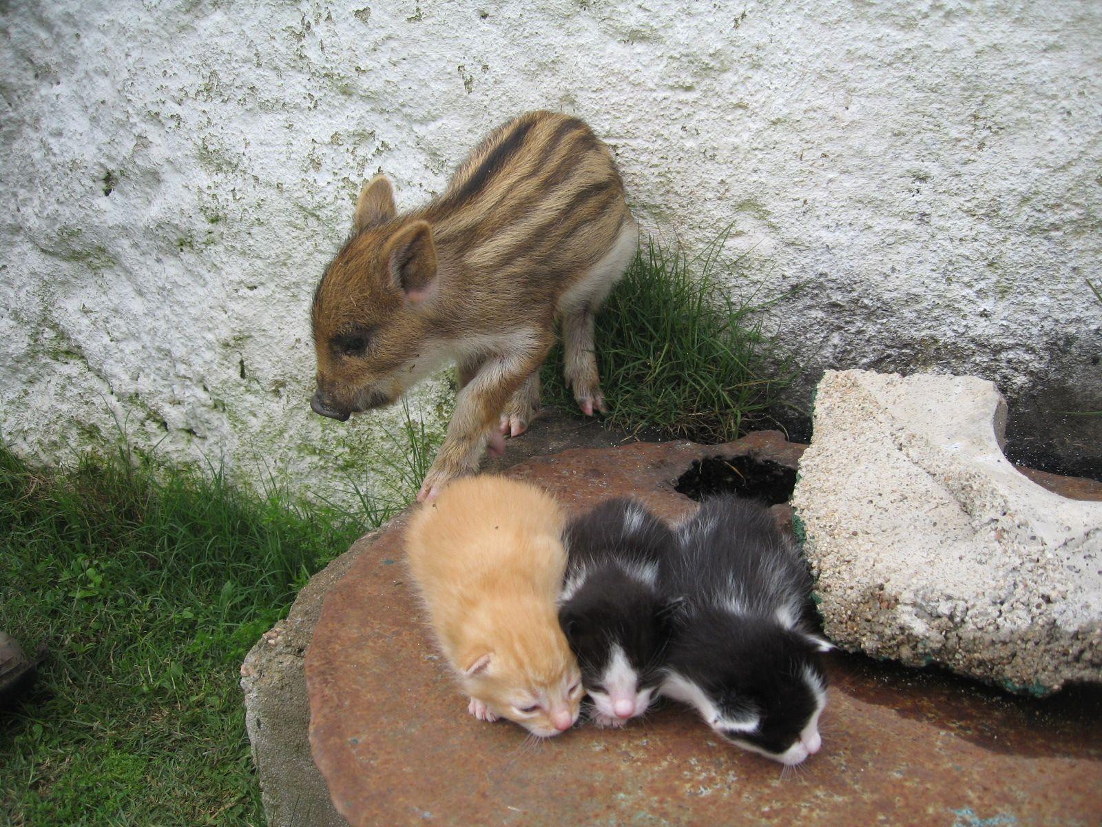 felipe,y los gatos