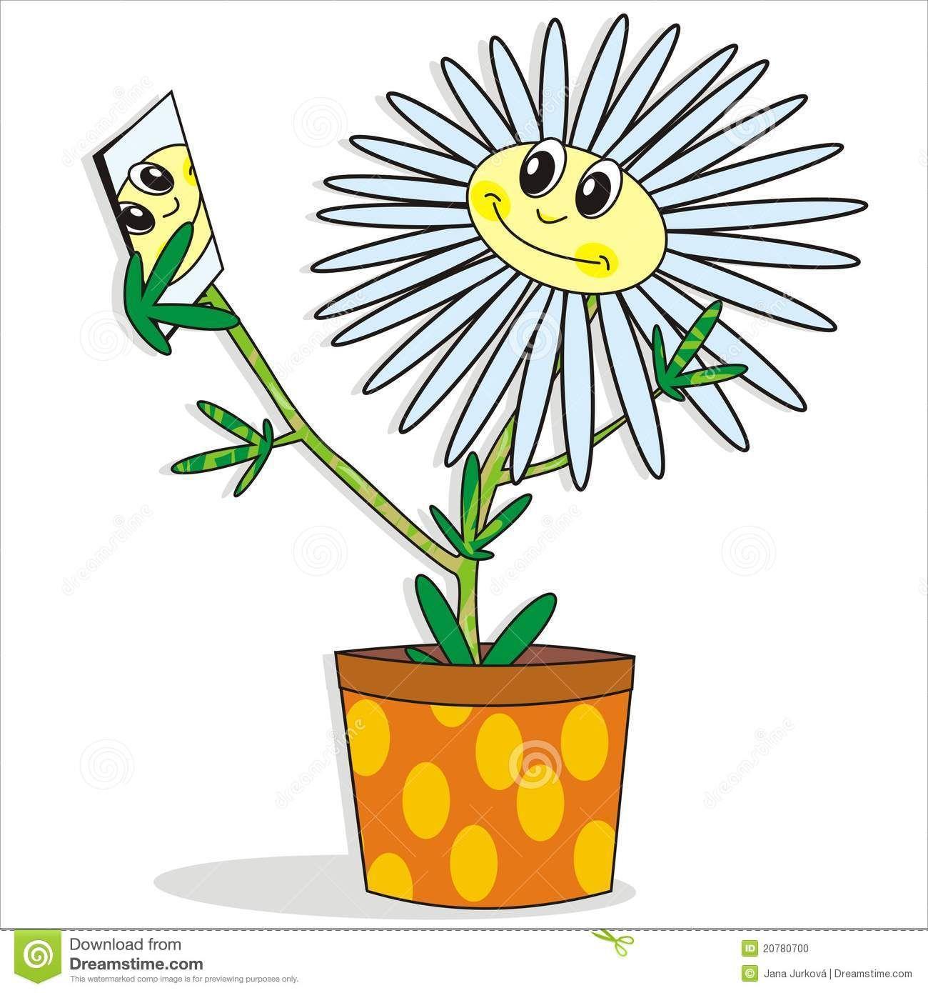 Pin By Tatiana Corciovei On Chrysanthenum Crizantema