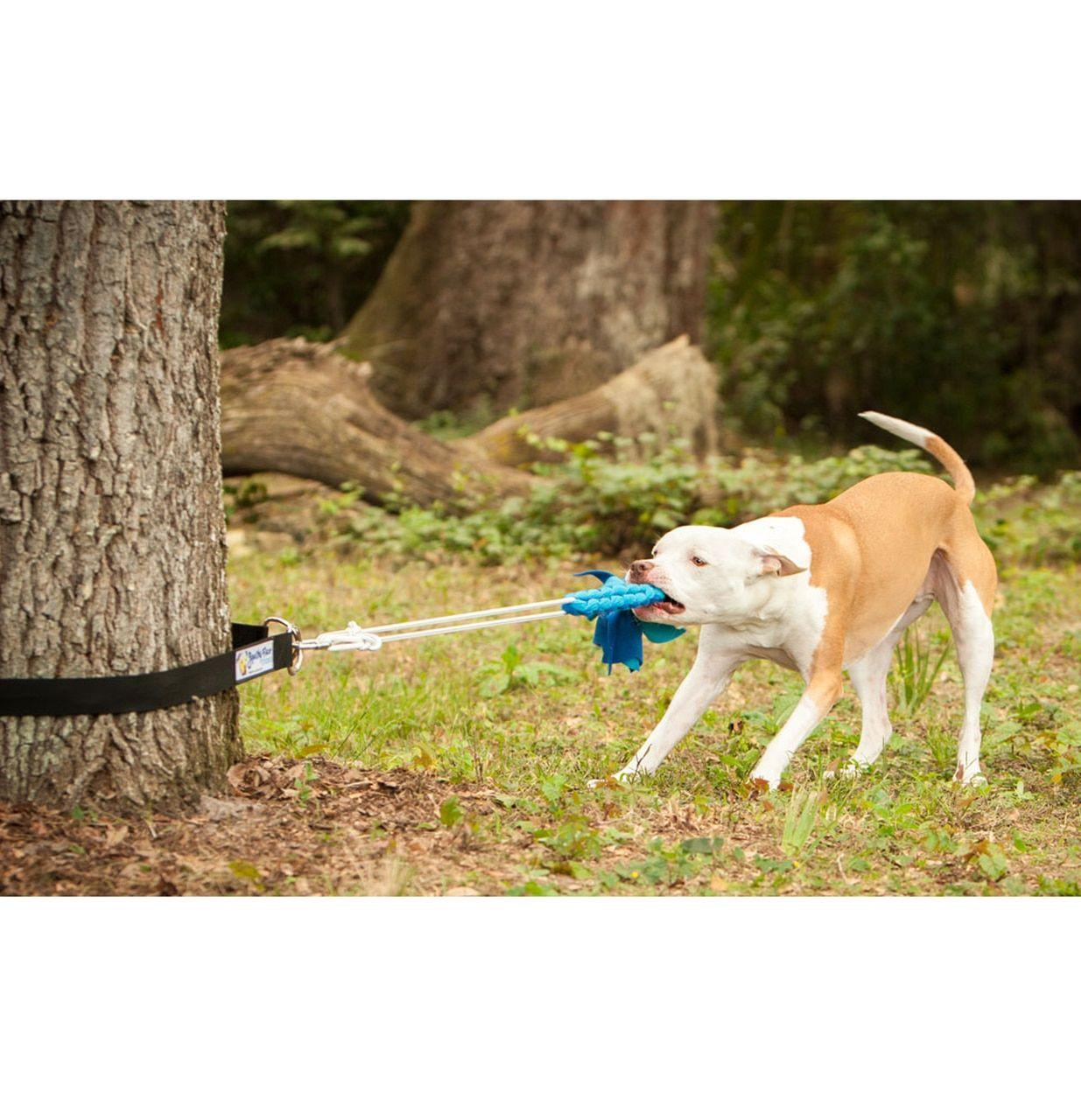 Squishy Face Studio Flirt Pole Super Tug Bundle Dog Toys Dog