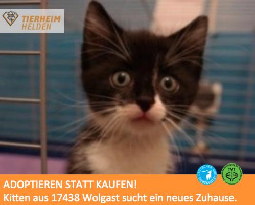 Dieses Kitten hatte sich hoffnungslos im Zaun verfangen