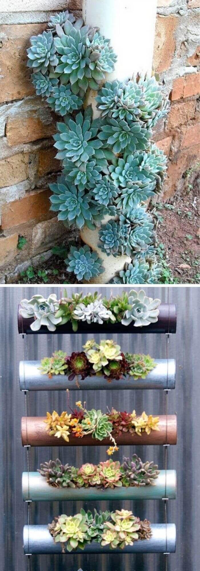 Photo of 20  Creative DIY Indoor and Outdoor Succulent Garden Ideas & Designs #creative #