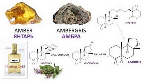 запах янтаря в парфюмерии