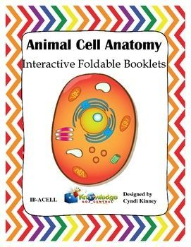 Animal cell anatomy interactive foldable booklet pinterest these interactive foldable booklets set of 3 were designed to be used with any ccuart Choice Image