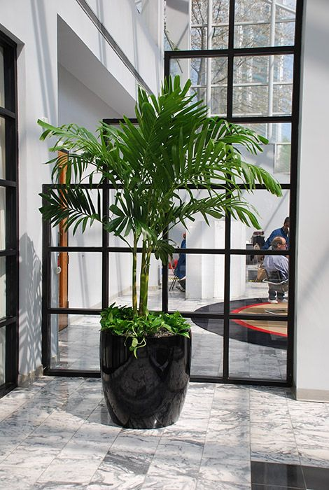 interior plants create a working atmosphere office