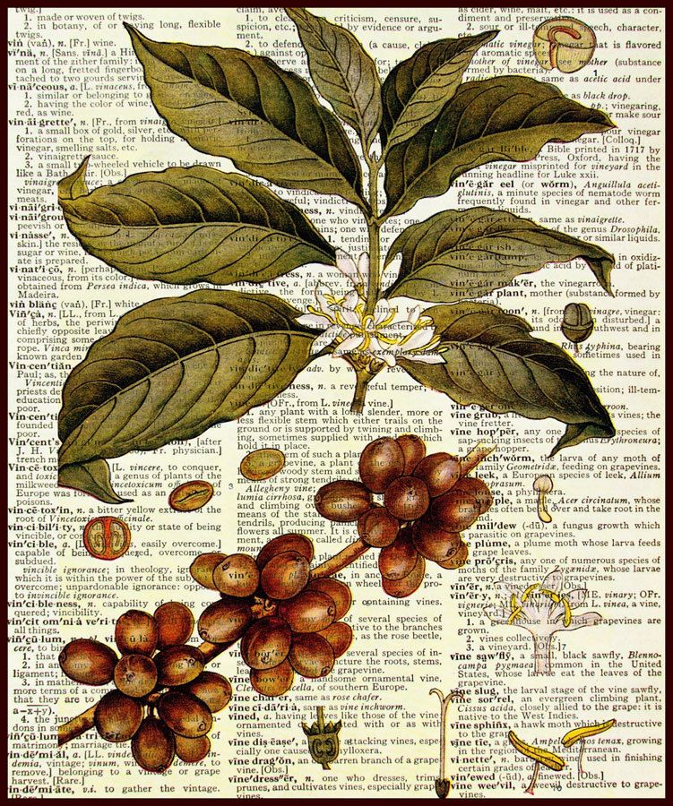 Coffee Bean Botanical Print on Dictionary Upcycled Book