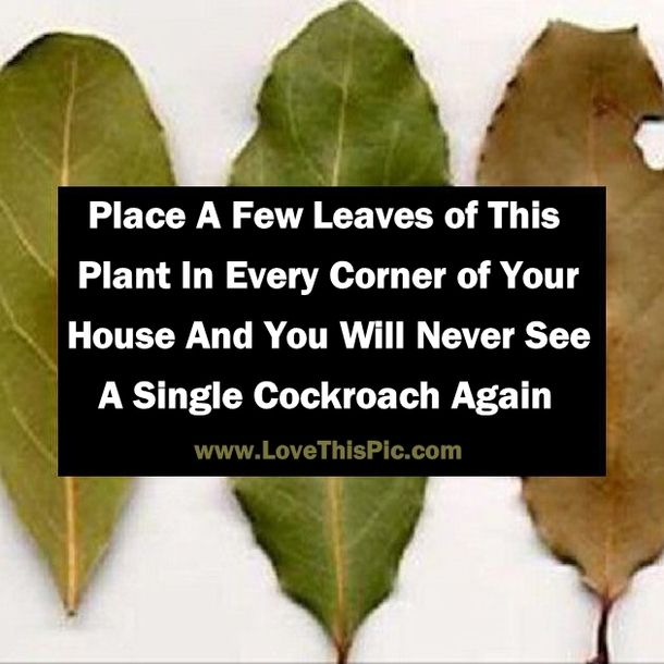 If You Want To Get Rid Of Cockroaches That Present In Your