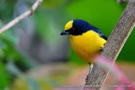 Come visit and take the time to take a hike and look for the birds. www.casademontana.com