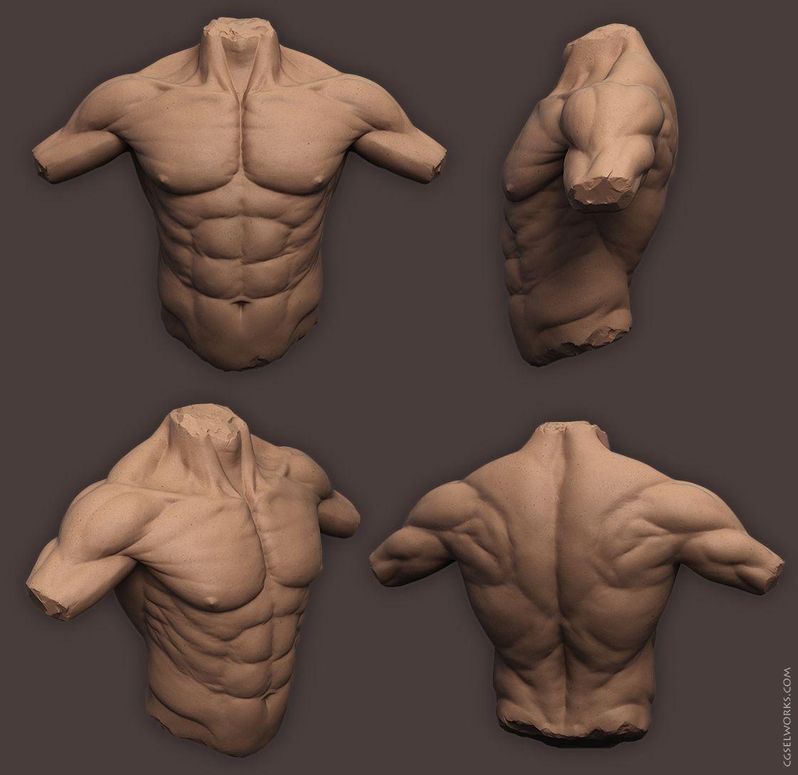 Anatomy_Male_Torso by SelWorks.deviantart.com on @deviantART