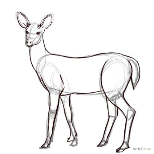 How   Draw a Deer   Deer   Pinterest   How draw, A deer and Google ...