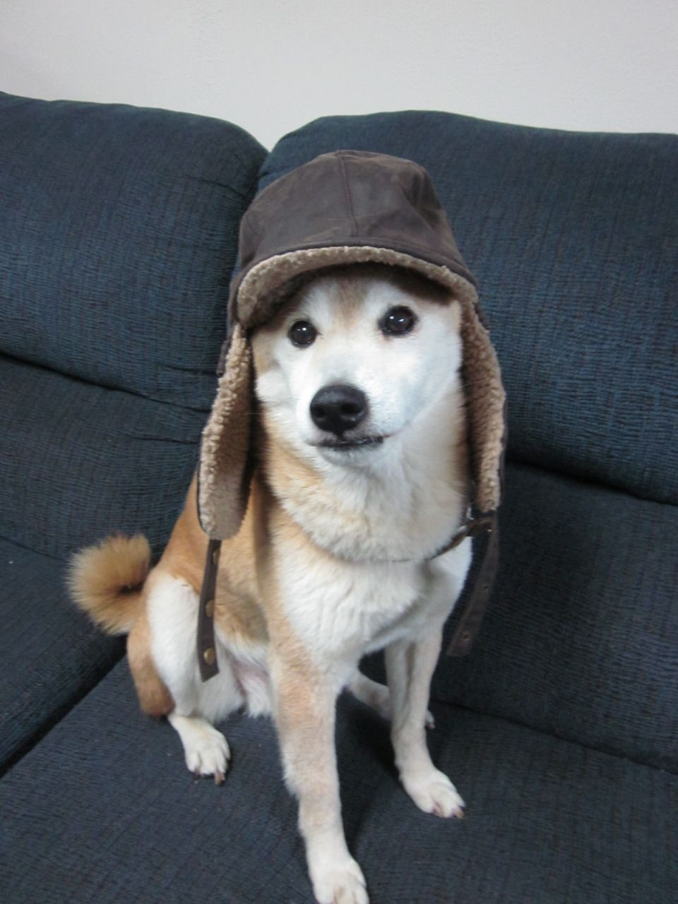 Toto In Hats Shiba Inu Dogs Animals