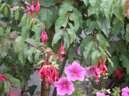 Um jardim para cuidar: Plantas que preferem terras ácidas