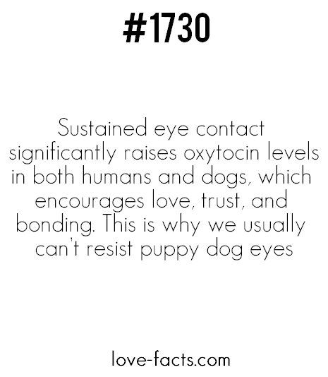 eye contact sign love