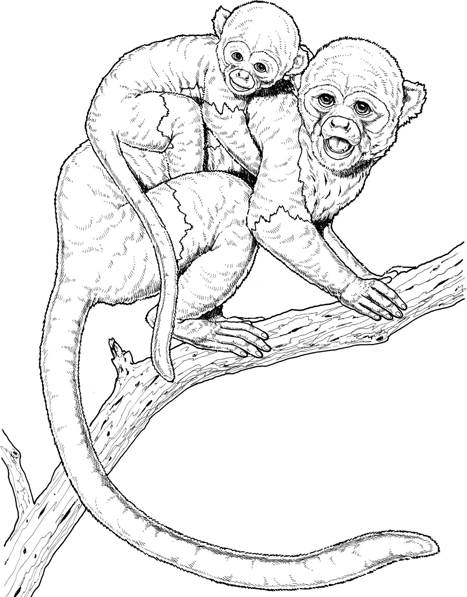 monkey on a branch tree coloring page