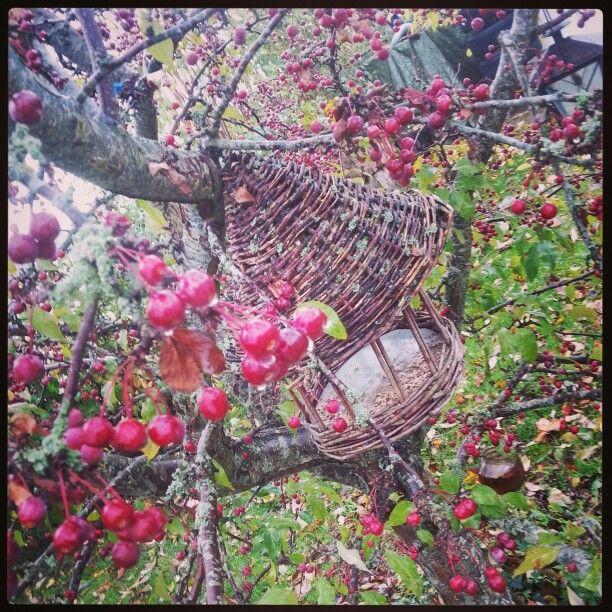 My garden ♥