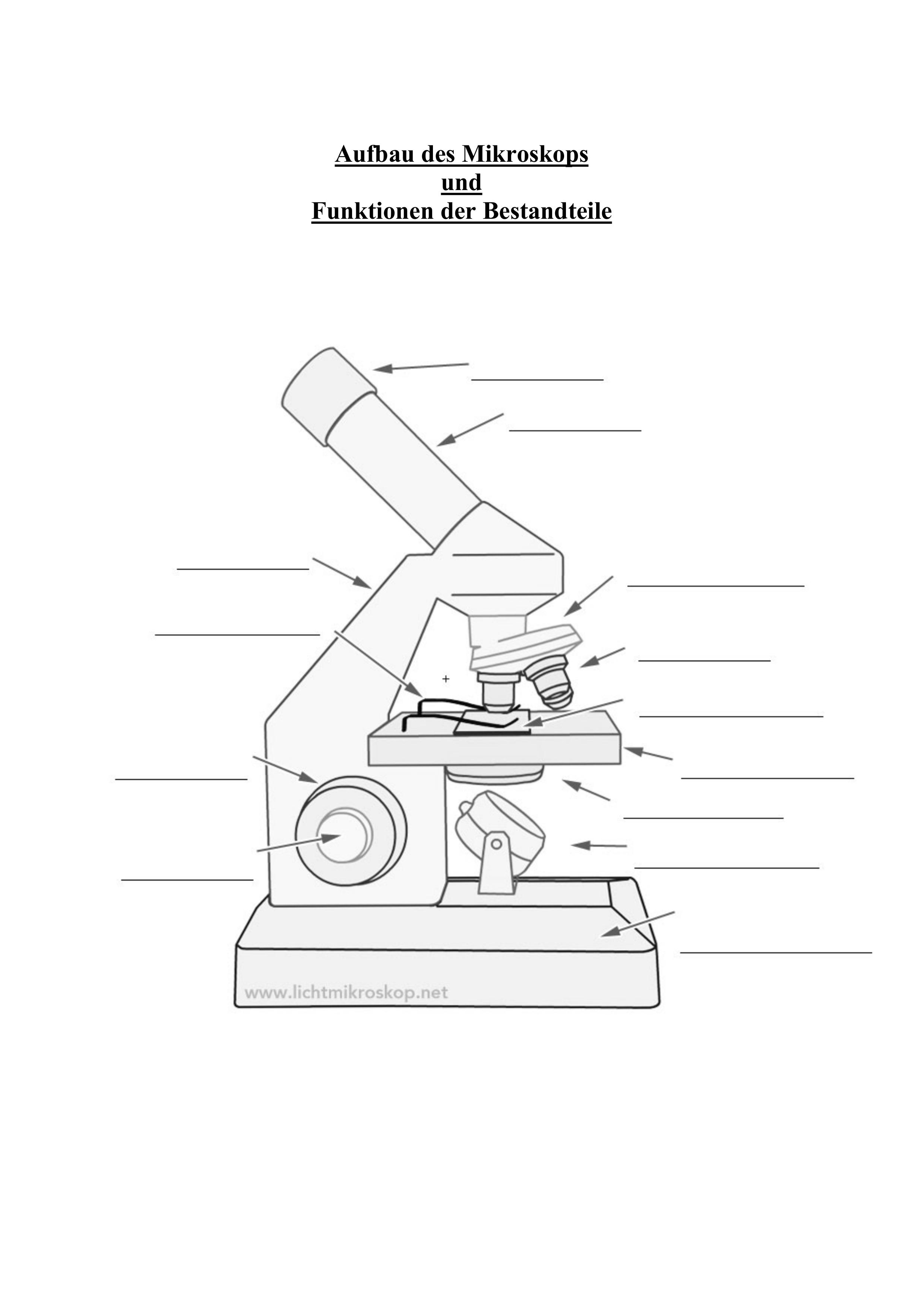 Arbeitsblatt Aufbau und Funktionen Mikroskop – Unterrichtsmaterial ...