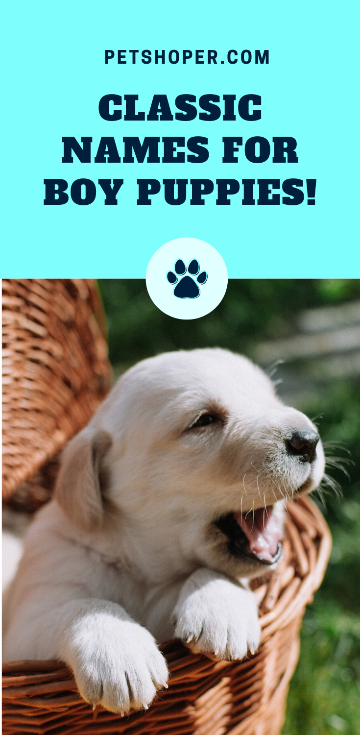 Names For Boy Puppies 100 Brilliant Cute Names Ideas In 2020