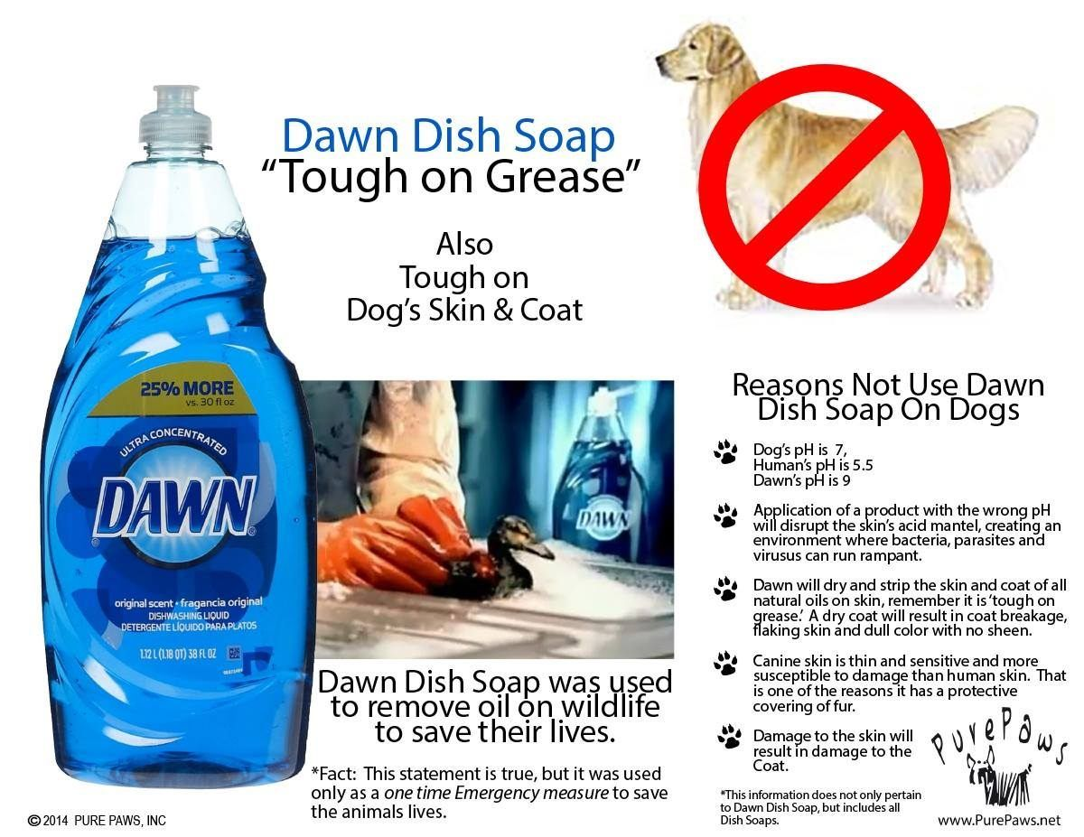 Can You Use Dish Soap To Wash A Dog Http Pets Ok Com Can You