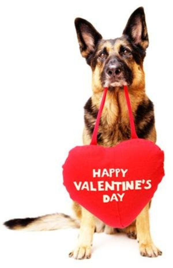 What A Sweet Doggie Love Your Pet Dog Valentines Valentines