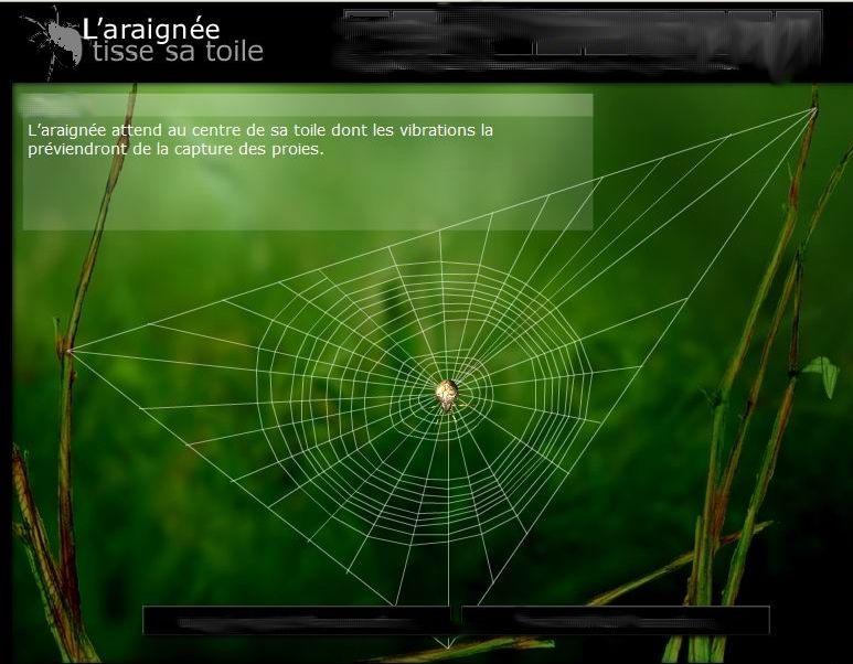 l araign 233 e tisse sa toile insectes chansons et histoires toile