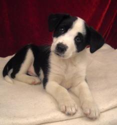 Adopt Jaxson On Dogs Border Collie Collie Mix
