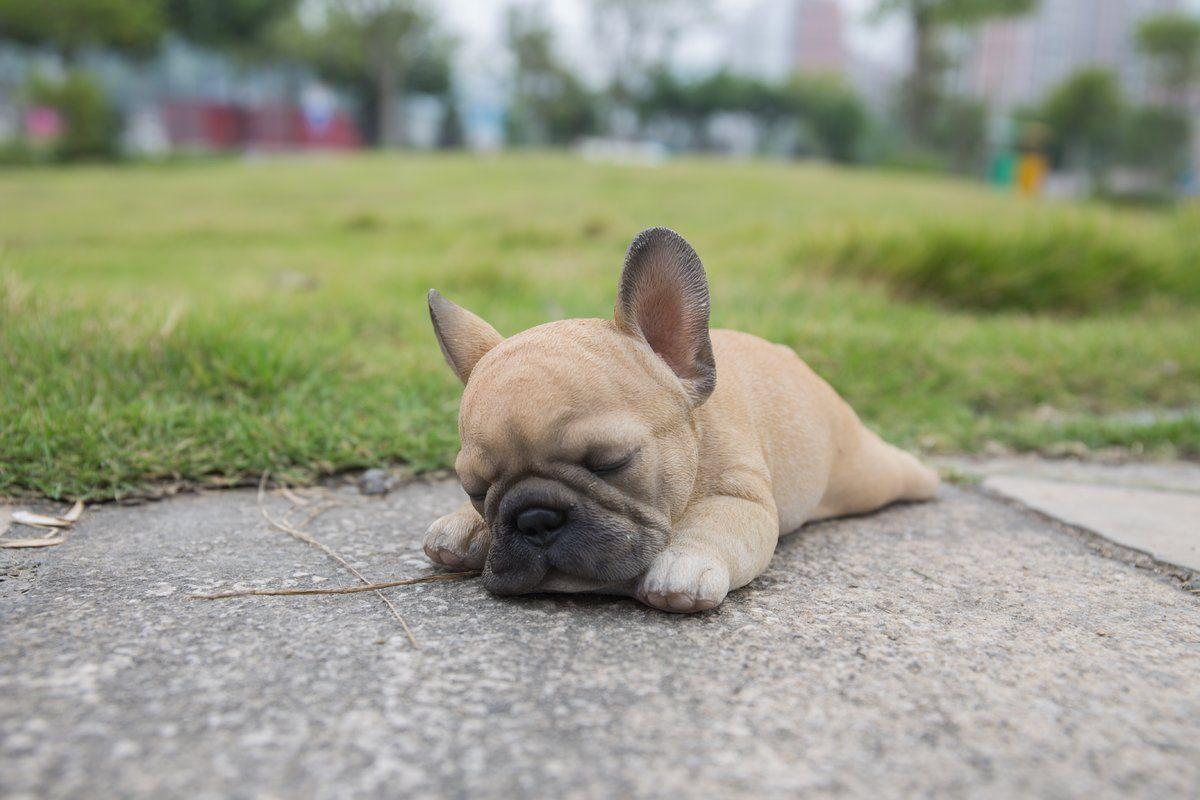 Sleeping Puppy Statue #frenchbulldogfullgrown