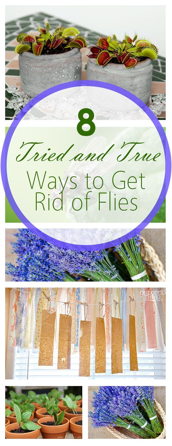 8 Tried and True Ways To Get Rid of Flies