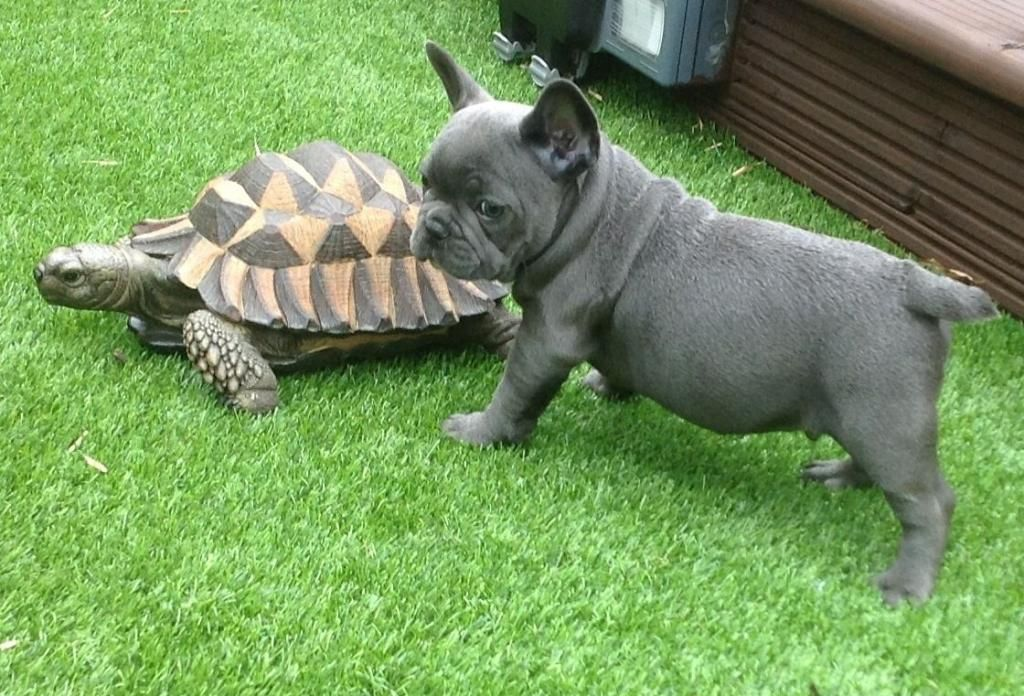 Celebrate National Turtle Day with these cute friendships