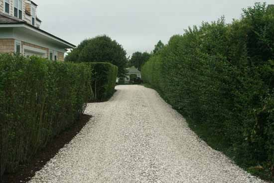 Oyster shell drive google search house stuff for Crushed oyster shells for landscaping