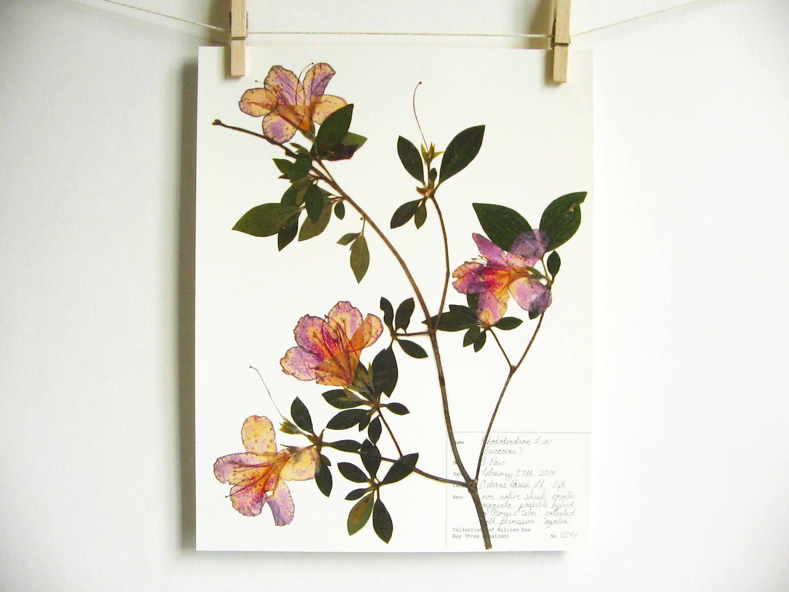 Azalee Druck; getrocknete Blumen Kunst botanische Wand Kunst gepresste Blumen Kunst Geschenk für Gärtner Herbarium botanische Druck New Orleans Pflanze Kunst