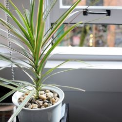 7 air-purifying plants for your home