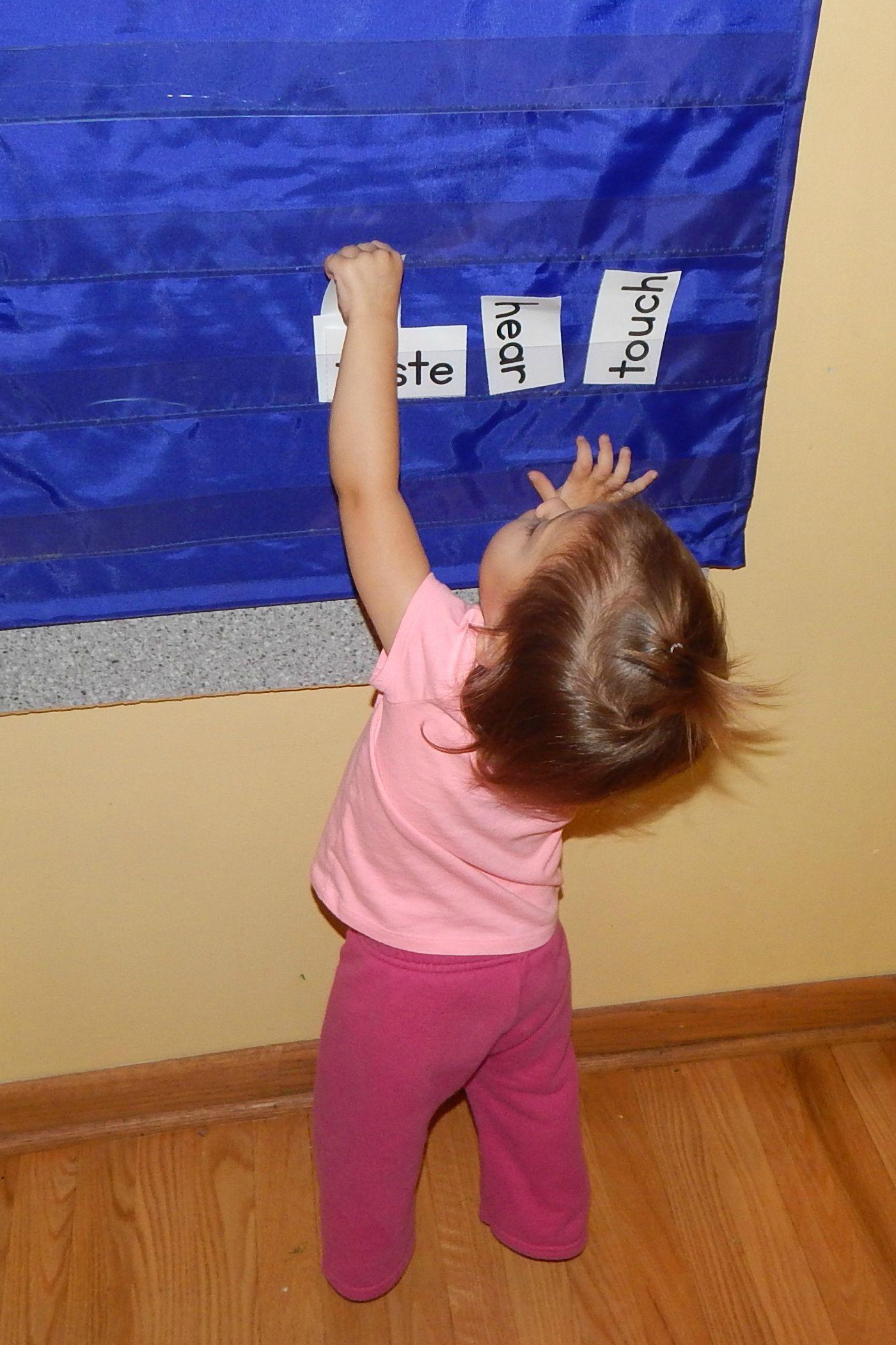 Free Five Senses Activity For Preschool And Kindergarten