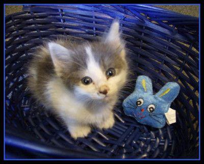 so cute funny petscute catsbetter