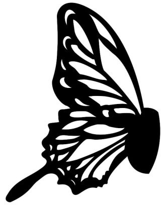 Butterfly Wing Template  Amazing Arthropods