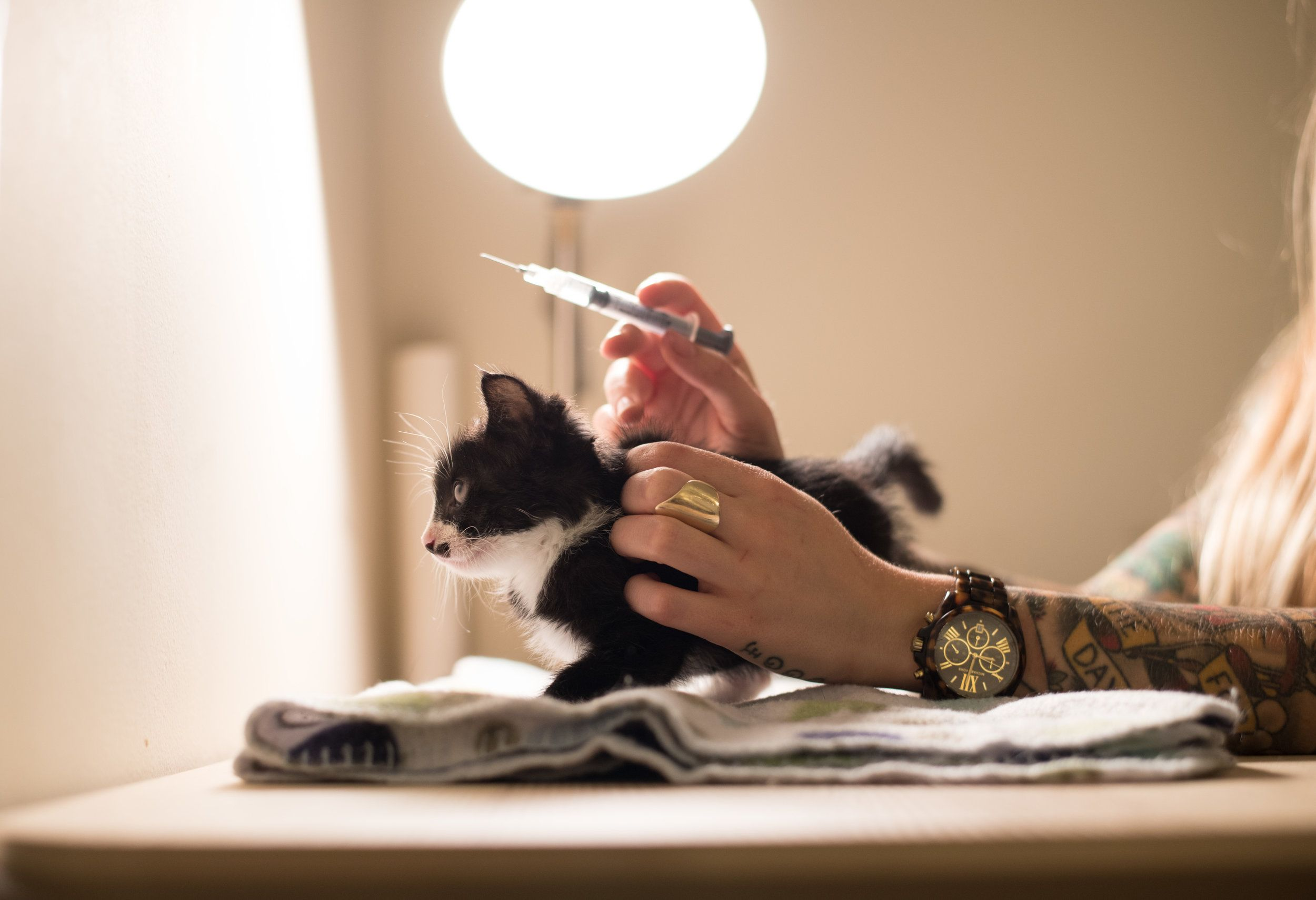 FADING KITTEN SYNDROME Riff, a survivor of FKS, receives