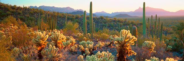 Sonoran Desert Organ Pipe Cactus National Monument AZ by Alain