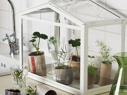 ikea socker mini serre maison laurence en 2019. Black Bedroom Furniture Sets. Home Design Ideas