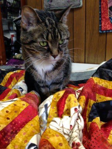 ❤ =^..^= ❤   sarah did it!: cats