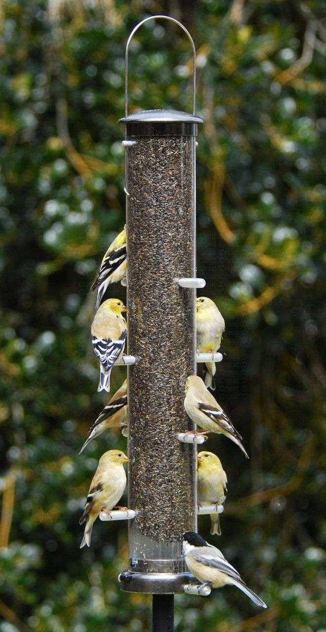 feeders feeder finch birds unlimited to qc nyjer wild md hang where